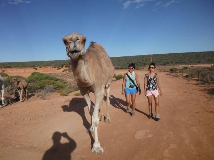 camels09