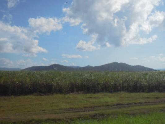 sugarfarm2