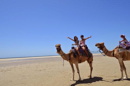 camels01