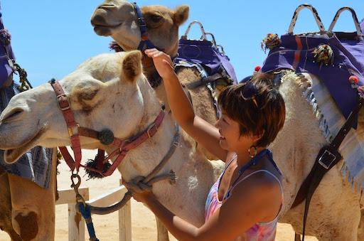 camels03
