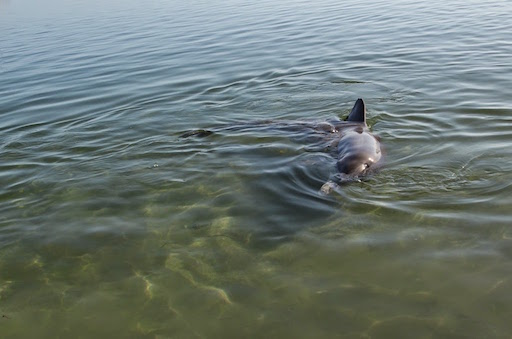 dolphins07